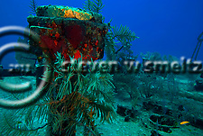 On Deck, Oro Verde shipwreck, Grand Cayman (Steven Smeltzer)