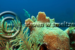 Diving Roundabout, Grand Cayman (Steven W Smeltzer)